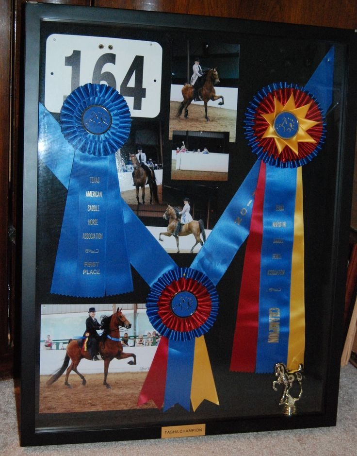 Shadow box frame I made from our winning ribbons, pics and trophy from our first championship