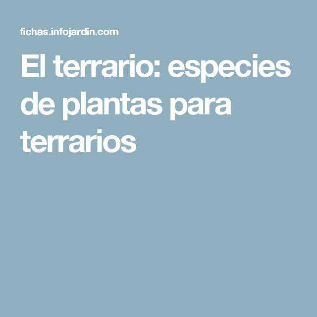 El terrario: especies de plantas para terrarios