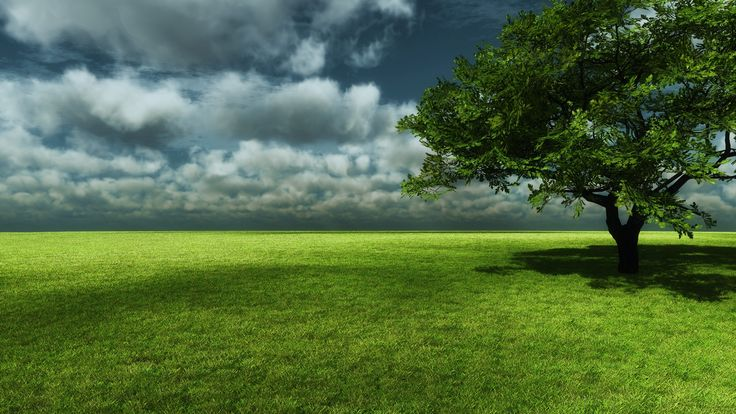 Top Forest - Nature - Foliage - Trees 01 http://www.wallpapersu.com/the-best-wallpapers-forest-nature-foliage-trees-sky/