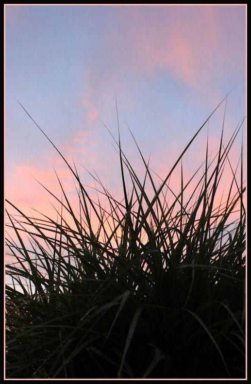 Ornamental Grass.   Ohio sunset ~ 7-22-11