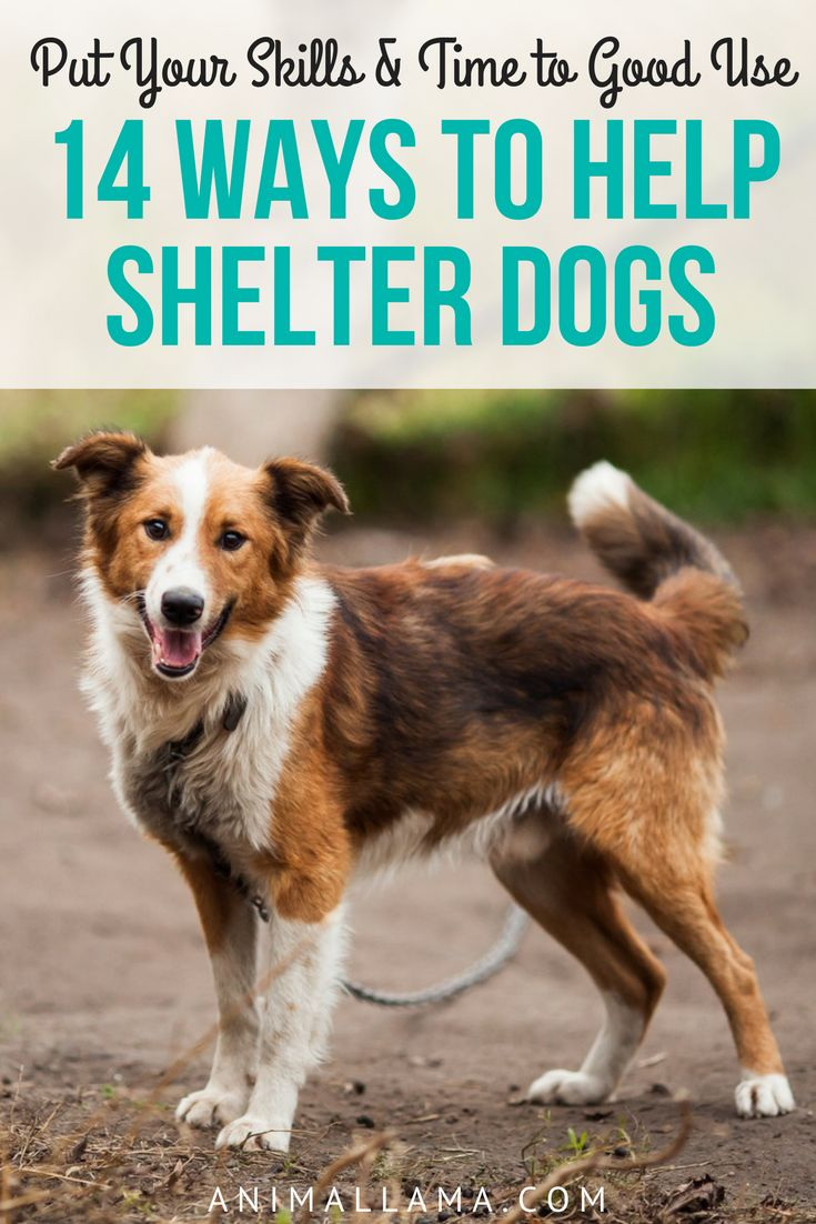 Donating money is not the only way to help shelter dogs. Here are 14 creative ways to help shelter dog other than donating money. Put your skills and time to good use! #dogs #shelter #shelterdog #help #helpinglostpets
