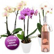 Plantes vertes et fleuries ORCHIDEE 2 BRANCHES + VIN ROSE