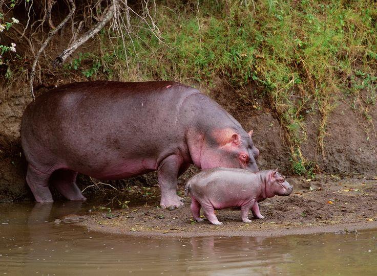 Animais Selvagens: Animais Selvagens                                                                                                                                                                                 Mais