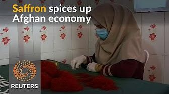 Saffron provides lifeline for Afghanistan's economy