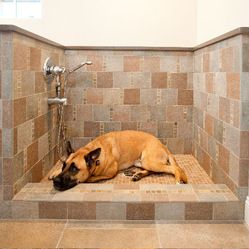 28 best dog wash station images on pinterest pets bathrooms and dog wash station design ideas pictures remodel and decor solutioingenieria Choice Image