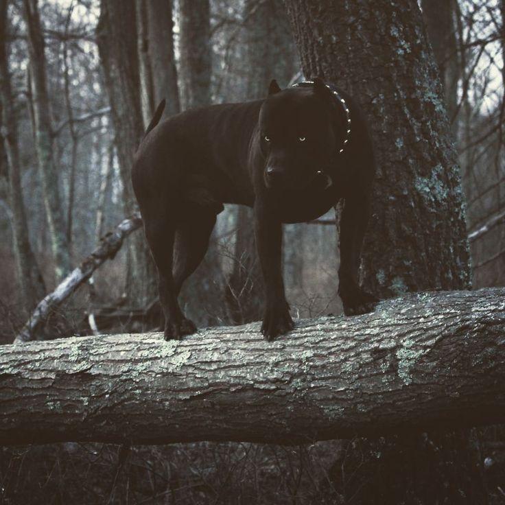 Wenn Mamas Im Tierheim Eine Schande Finden Wurden Die So Aussahe Wurden Sie I Tiere Aussahe Die Eine Finden Im M Tiere Hund Hunde Und Tiere