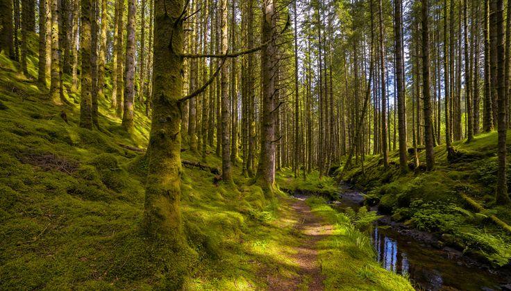 Sunlight in the Forest by Eirik Sørstrømmen on 500px