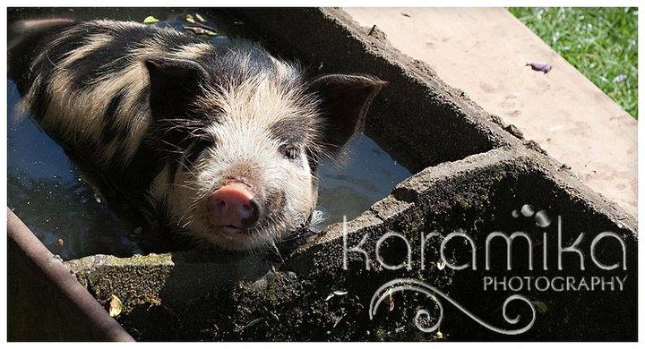 karamika photography, new zealand