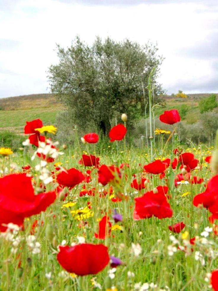 Trás-os-Montes | Mirandela | #Portugal