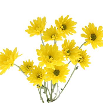 FiftyFlowers.com - Lemon Lime Cushion Flower