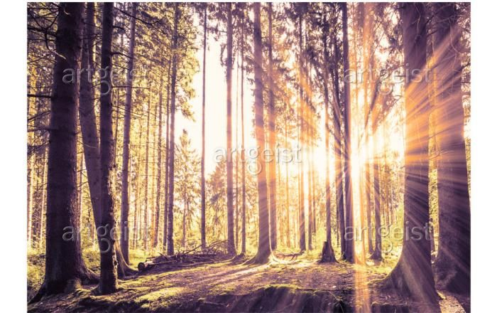 Fotomurale Forest Afternoon - Foresta - Paesaggi - Natura - Fotomurali