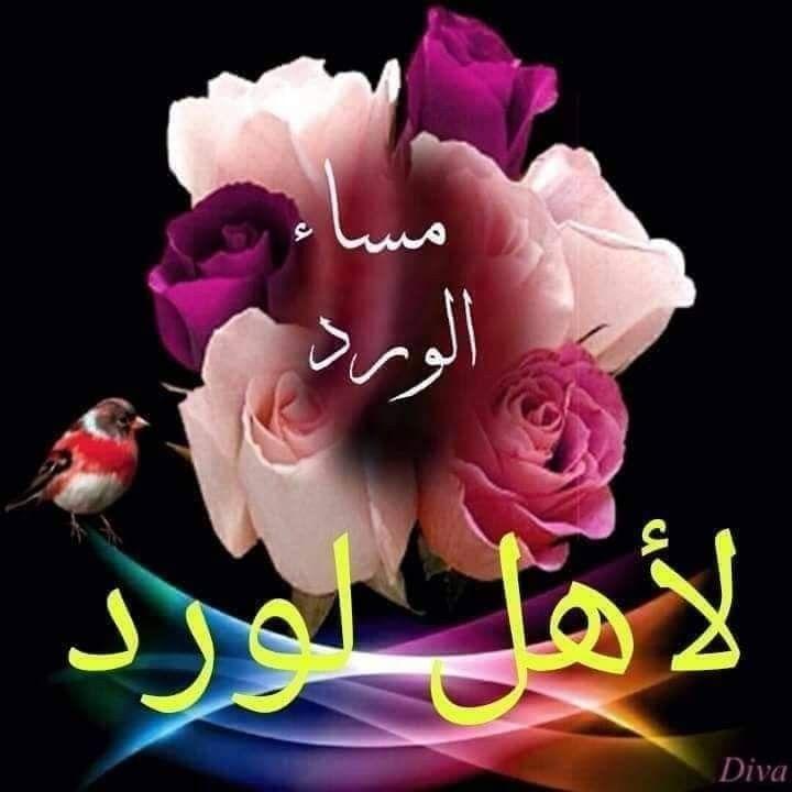 ونظل نرسل ورود المساء لكل قلب جميل في صفحتي يستحق الاحترام مساء الورد Flower Wallpaper Flowers Rose
