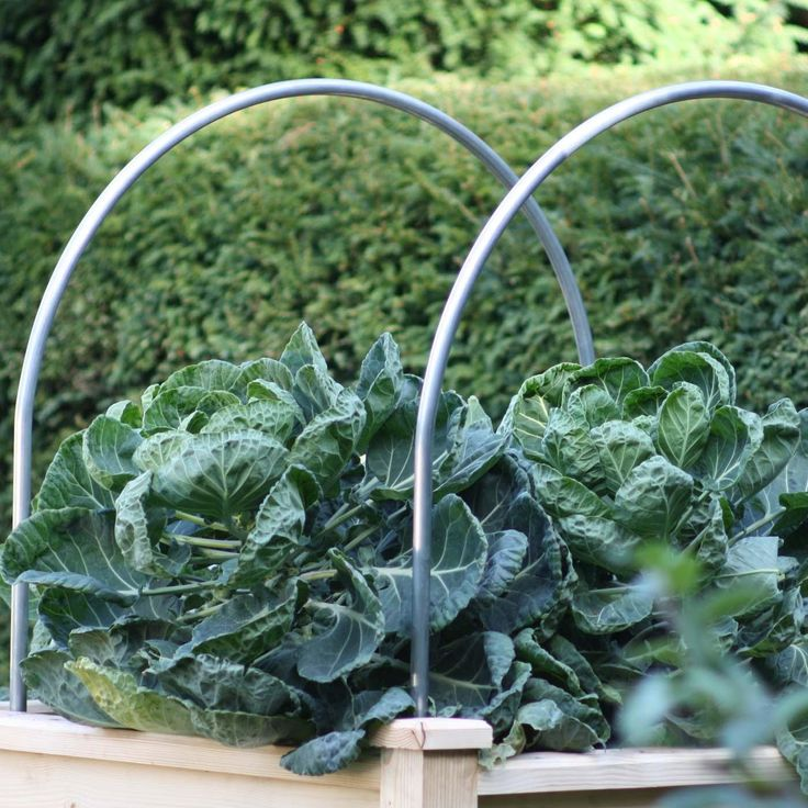 45 Best Raised Garden Covering Images On Pinterest