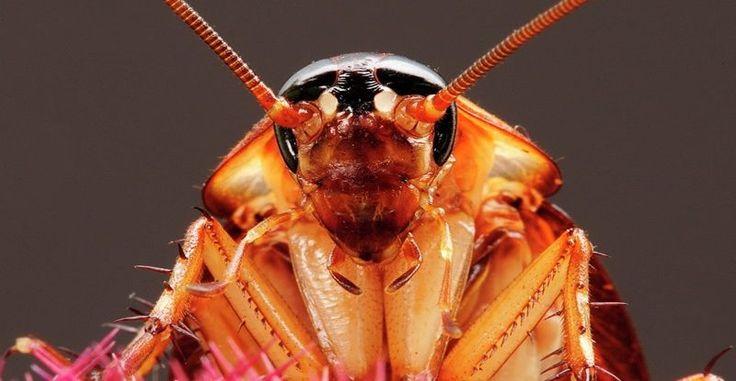 https://cuantoviven.info/  Cuanto viven los animales  Cuantoviven.info es un sitio web con información veraz y de calidad sobre cuánto viven los animales de la naturaleza. Si tienes dudas sobre la esperanza de vida de algún animal en concreto no dudes en visitas nuestra página web informativa.  #Animales, #mamiferos, #naturaleza, #mascotas, #insectos, #anfibios, #cuantoviven