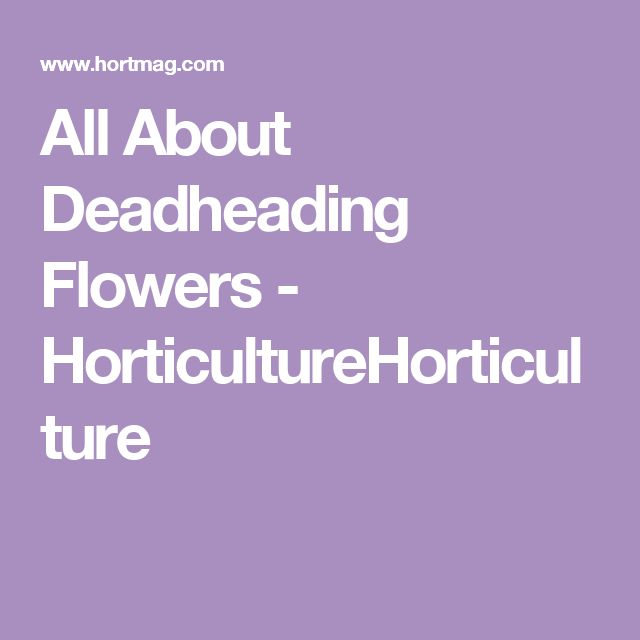 All About Deadheading Flowers - HorticultureHorticulture