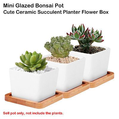Ceramica-Branca-Vitrificada-suculento-plantador-Vaso-Para-Flores-Bonsai-Pote-Pires-De-Agua-D2F4