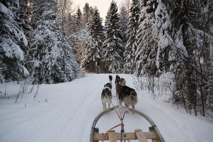 Luleå Dogsledding Tours | Book Here | www.lulea-swedishlapland.com