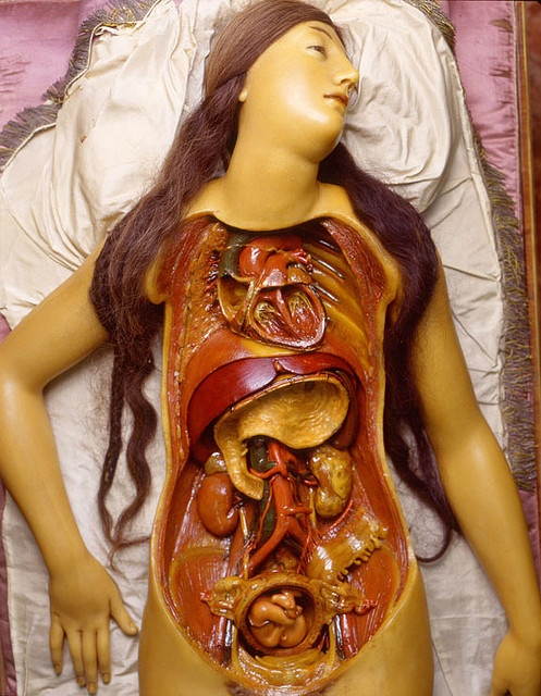 """""""Anatomical Venus,"""" 1782  From the Getty Villa's Color of Life Exhibition.  Clemente Susini and workshop, Italian, 1754–1805, Anatomical Venus, 1782  Photo by Saulo Bambi, Museo di Storia Naturale """"La Specola"""" Florence, Italy"""