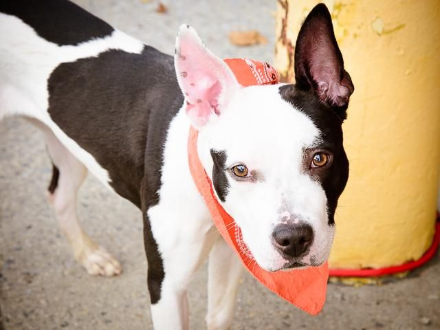 Adopt Dogs Hamilton Ontario