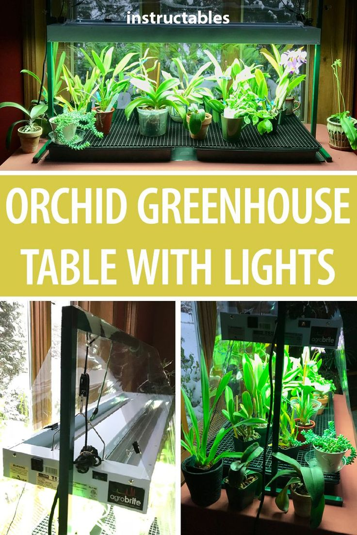 Orchid Greenhouse Table With Lights (With images