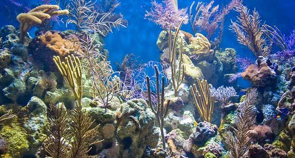 Caribbean Coral Reef Tank Steinhart Aquarium Pinterest