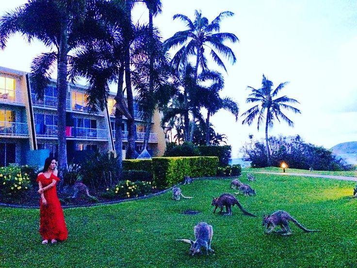 Always together with Kangaroo野生のカンガルーと一緒に暮らしたり #オーストラリア #ロコガール #デイドリームアイランド #ハッピー#リゾート #スパ #島では野生 #ホテル #夢の島 #旅 #世界遺産 #locogirl #beachgirl #trip #daydreamisland #beach #happy #hammock #fun #spa #resort #summer #relax #worldheritage #mermaid #GreatBarrierReef #kangaroo by tomomi_tojo http://ift.tt/1UokkV2