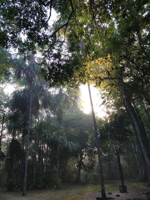 Tikal Guatemala: dentro de la gran civilización maya - Sapphire & Elm Travel Co.
