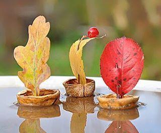 """Осенние кораблики ⛵️⛵️⛵️ вам потребуется скорлупа грецкого ореха, веточка, красивый листочек и немного пластилина что бы закрепить """"парус"""" в скорлупке _____________________ 🍁🍂 Если у вас есть чем поделиться - ставьте тег #для_all4mammy 🍂🍁 _____________________"""