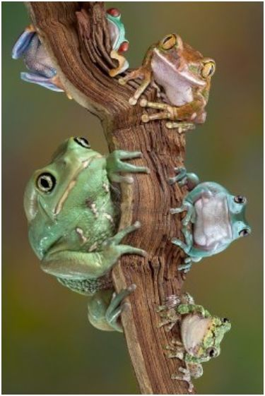 My My What Do I See? . . . 5 Frogs Up in a Tree!