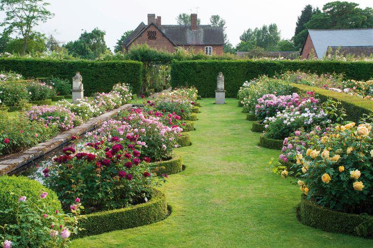 9 Best David Austin Rose Garden And Plant Centre Images On Pinterest David Austin Roses