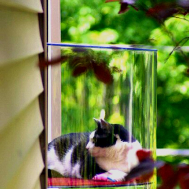 Omg Cat Window Extension Yes Cats Pinterest