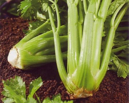 The Garden of Eaden: HOW TO GROW CELERY FROM SEED