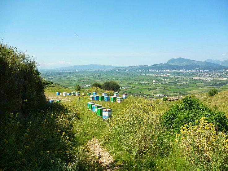 Το μελισσοκομείο ανάμεσα στους ποταμούς Λούρο και Άραχθο στις ανθισμένες πλαγιές του Ξηροβουνίου.