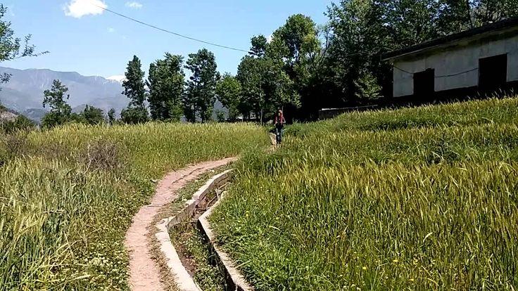 Balakot wheat field, Heaven on Earth
