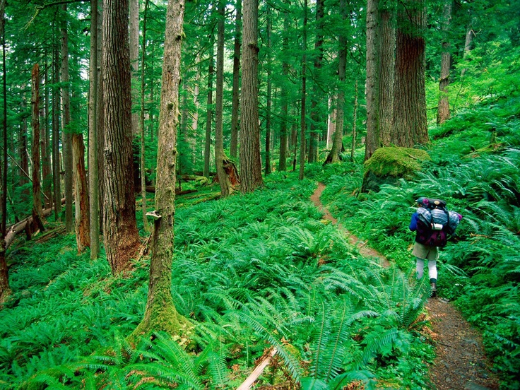 Hiking in the Olympic National Rainforest