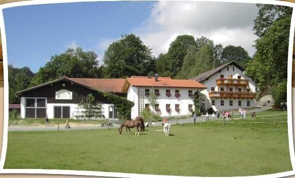 Kinderparadies Höcker Bayerischer Wald Schönberg Grafenau Urlaub auf dem Bauernhof 3 Stellplätze