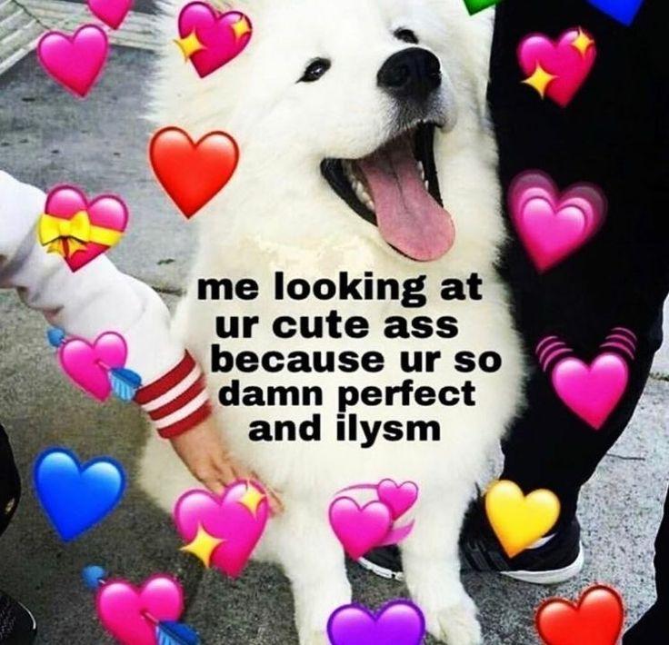 cute memes/ dog love in 2020 Cute memes, Gf memes, Sweet