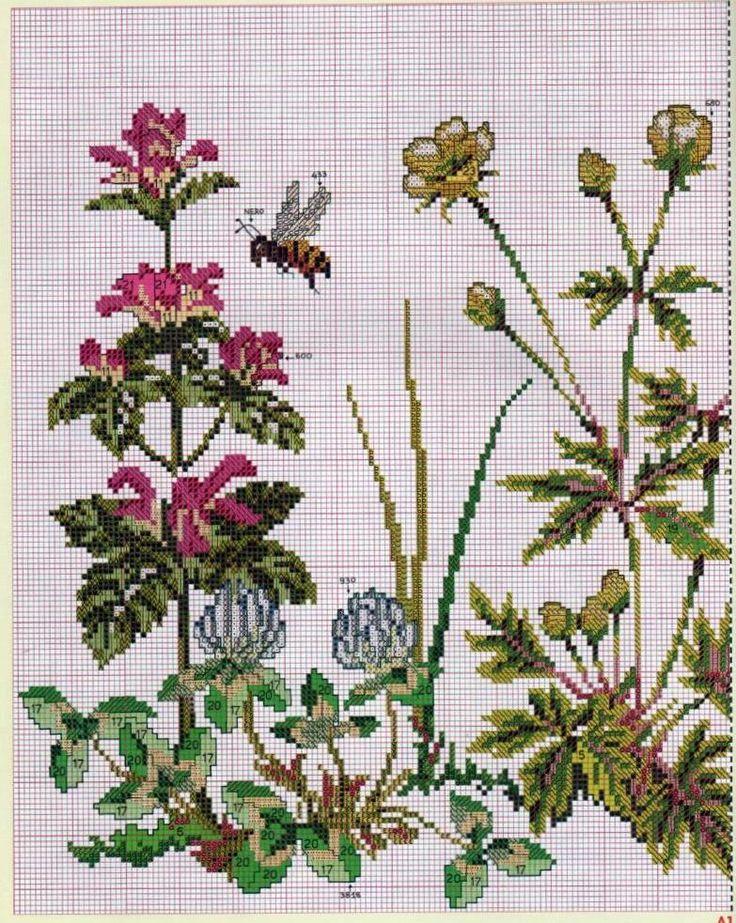 fiori di campo 2