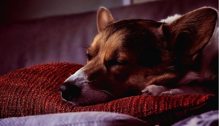 Essential Oils for Dog Arthritis (Resting and exercising are mandatory when they're pain)