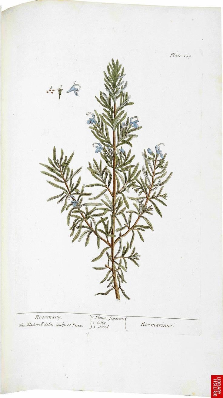 43 Best Blackwells Herbal Images On Pinterest Botanical Genetics Animal Mendelian Diagram Chickens Vintageprintable Embroidery