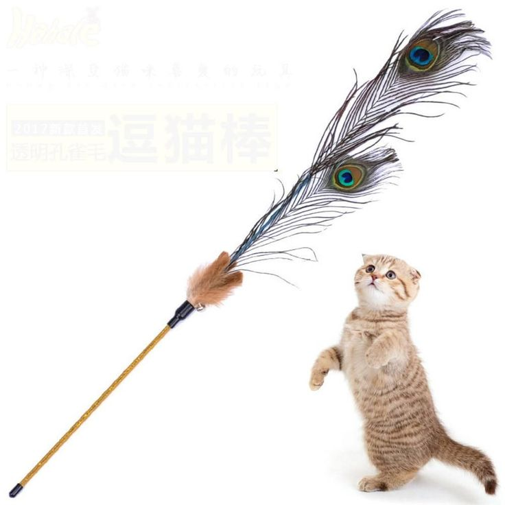 Kitten Cat Teaser Interactive Toy  Rod with Bell Feather Products For pet cat toys interactive #interactivecattoysfunny