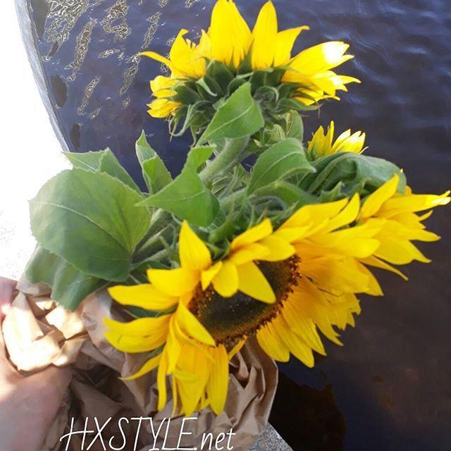 KESÄ IHANAT AURINGONKUKAT Torilta ❤ Kukat, Puutarhat, kasvit...Tykkään&Nautin. SUOSITTELEN Lämpimästi.SEURAA BLOGIA  Arjen Piristystä&LUXSUSTA minun makuun&Tyyliin. Nähdään...HYMY #blogi #elämäntapa #elämäntapablogi  #kesä #kukat #tori #auringonkukat #koti#sisustus #tyyli ❤⏰