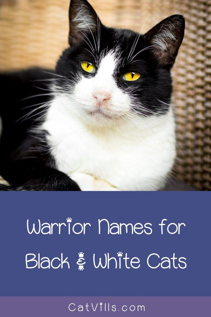 62 Darling Black And White Cat Names Catvills In 2020 Cute Black Kitten Cat Names Black And White Kittens