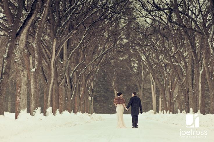 canopy of trees, Assiniboine Park Winnipeg Joel Ross Photography Wedding photography ideas in Winnipeg