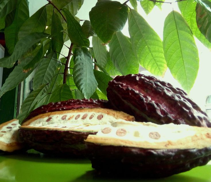 Wissenswertes zu Mezcal Tequila und Kakao