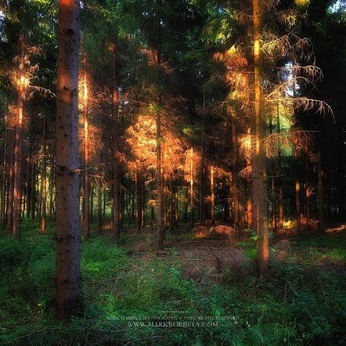 Erdőtűz / Forest Fire
