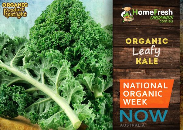 Organic Kale is highly regarded in the health and wellbeing community for it's several health properties. These include cholesterol lowering benefits, cancer risk lowering benefits, detoxification and anti-inflammatory benefits. http://homefreshcommunity.com.au/2014/10/07/organic-kale/