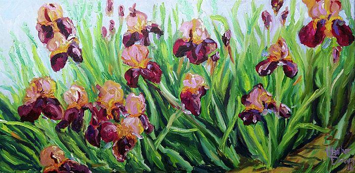 Irises by Heather Kemp
