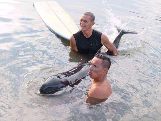 cette femelle globicéphale sauvé par des surfeurs