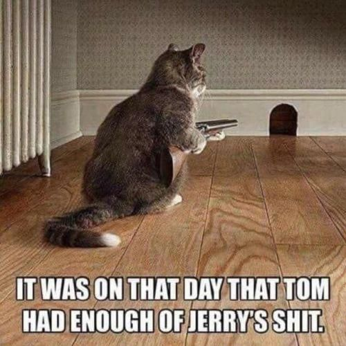 Funny Cat refrigerator magnet 3 1/2 x 3 1/2″ #cats…